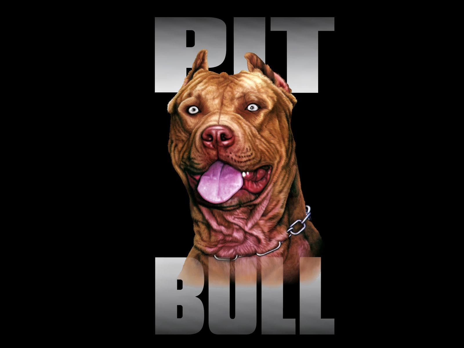 Pitbull Screensaver