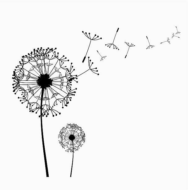 Dandelion Vector Free