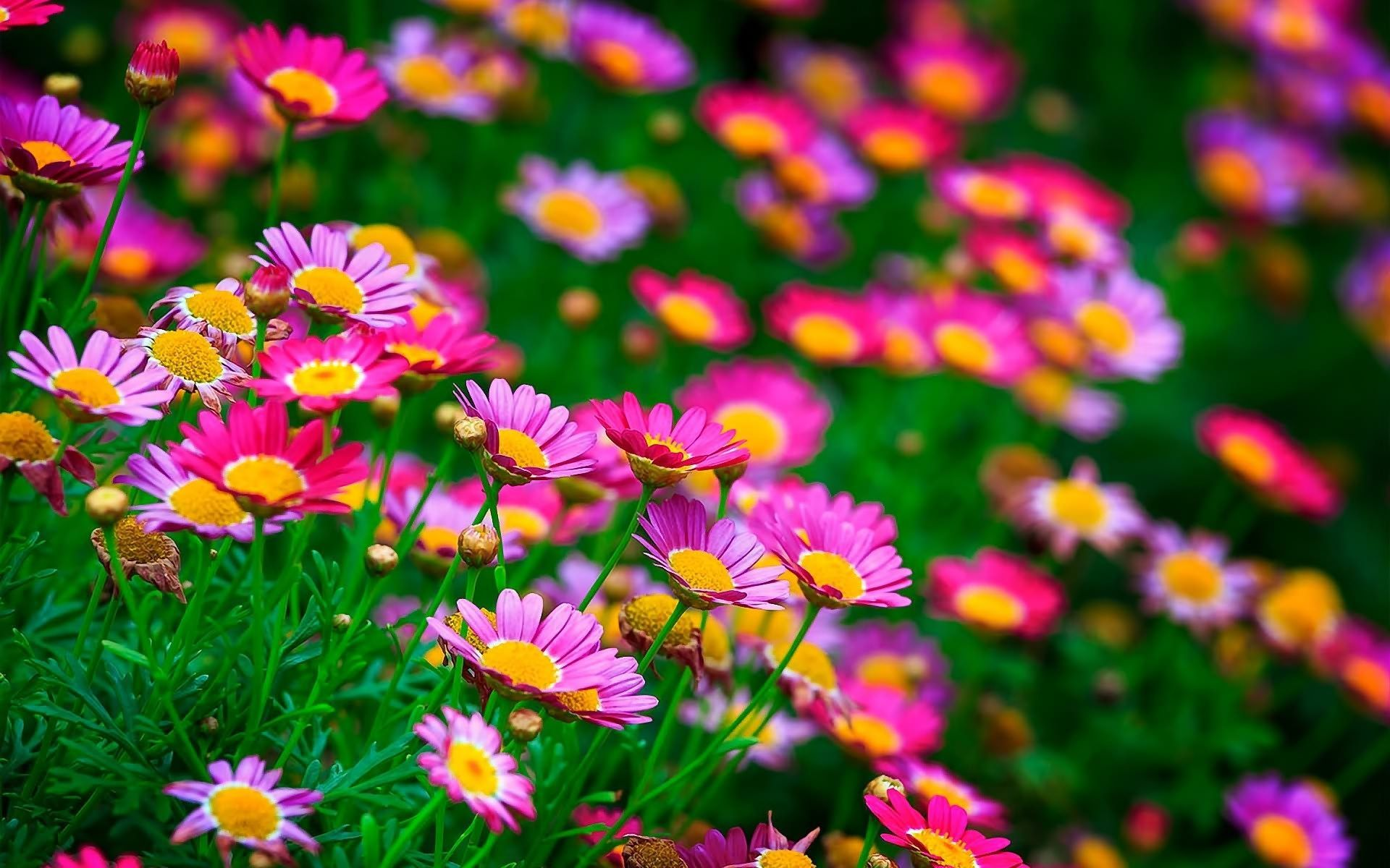 Most Beautiful Flower Wallpapers Free