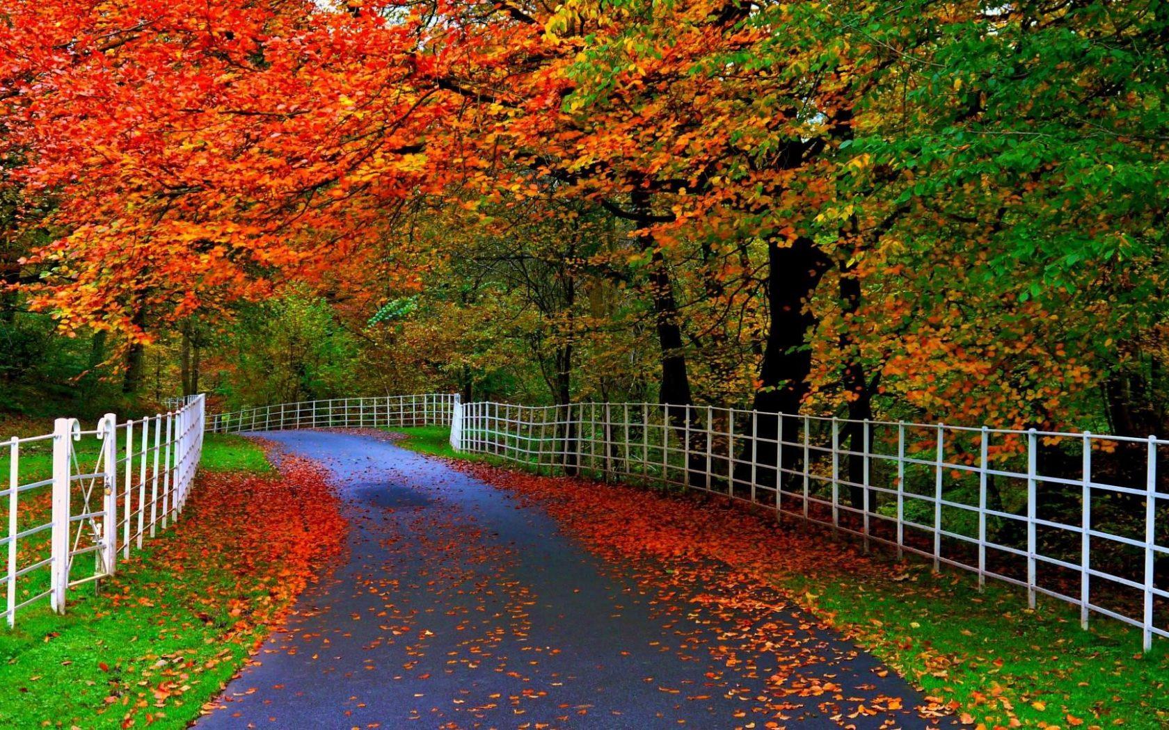Most Beautiful Desktop Nature