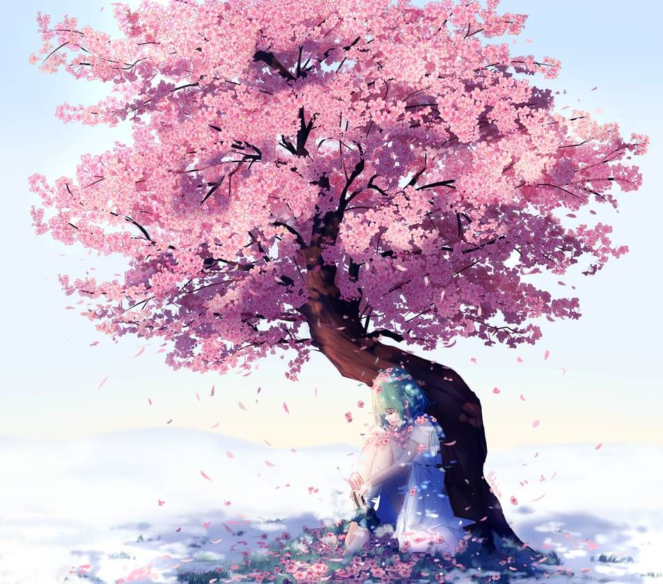Cherry Blossom Drawing Anime
