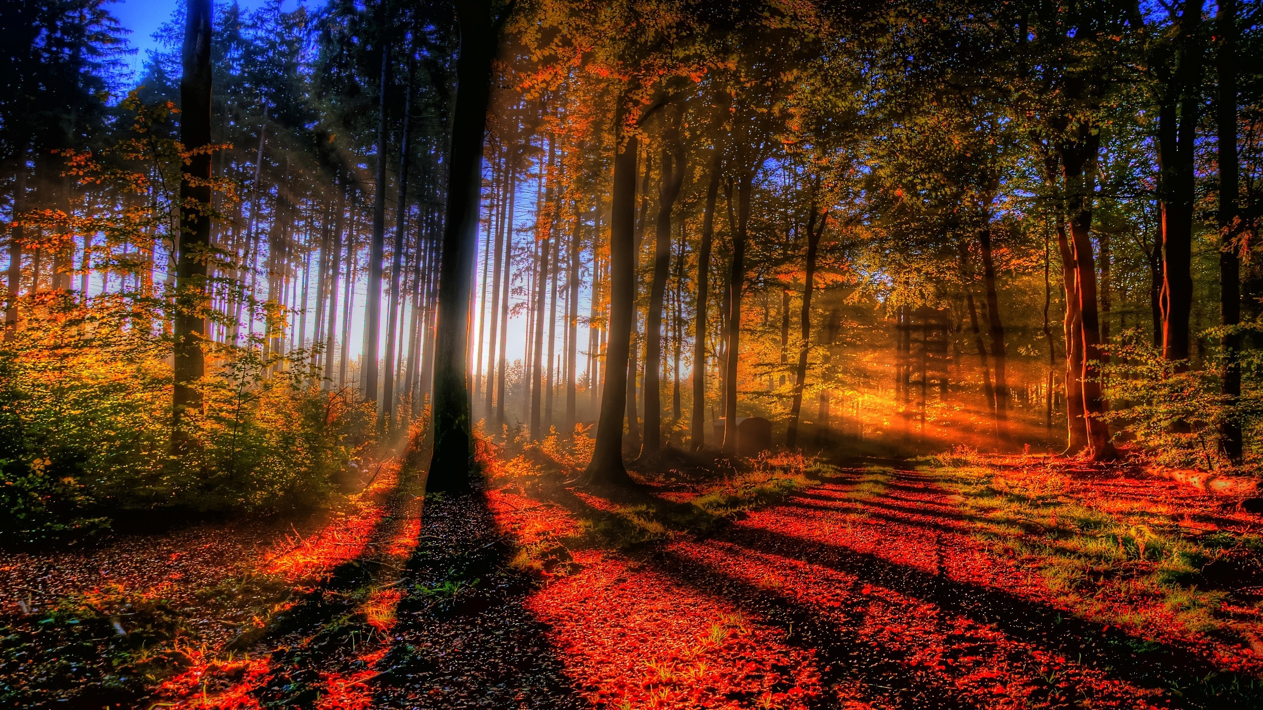 Fall Forest HD Wallpapers