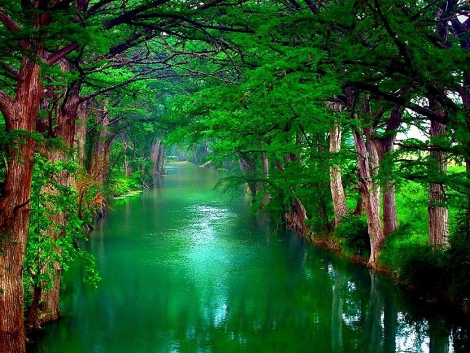 Nature Desktop
