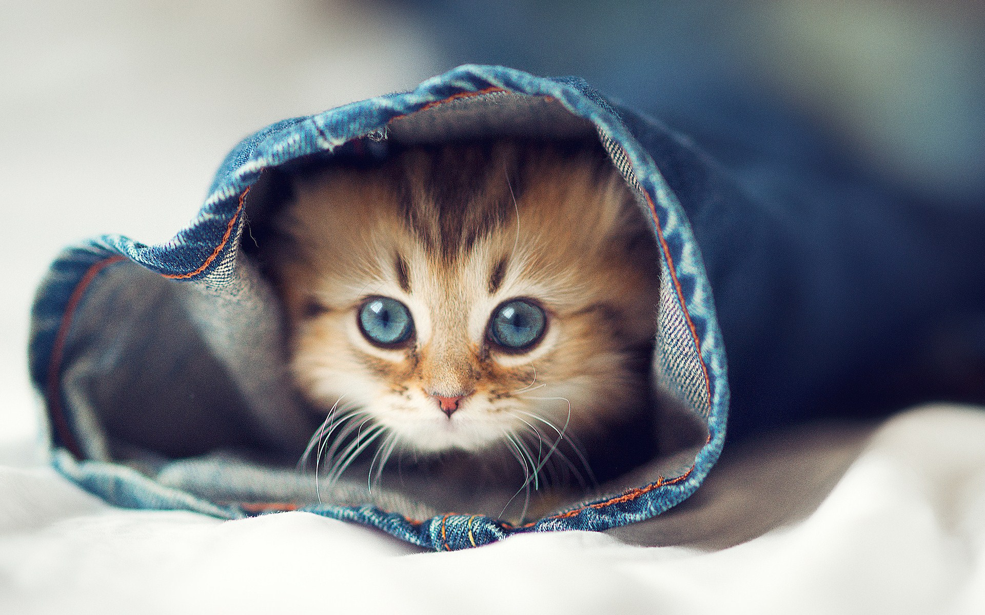 Cute Wallpapers for Background