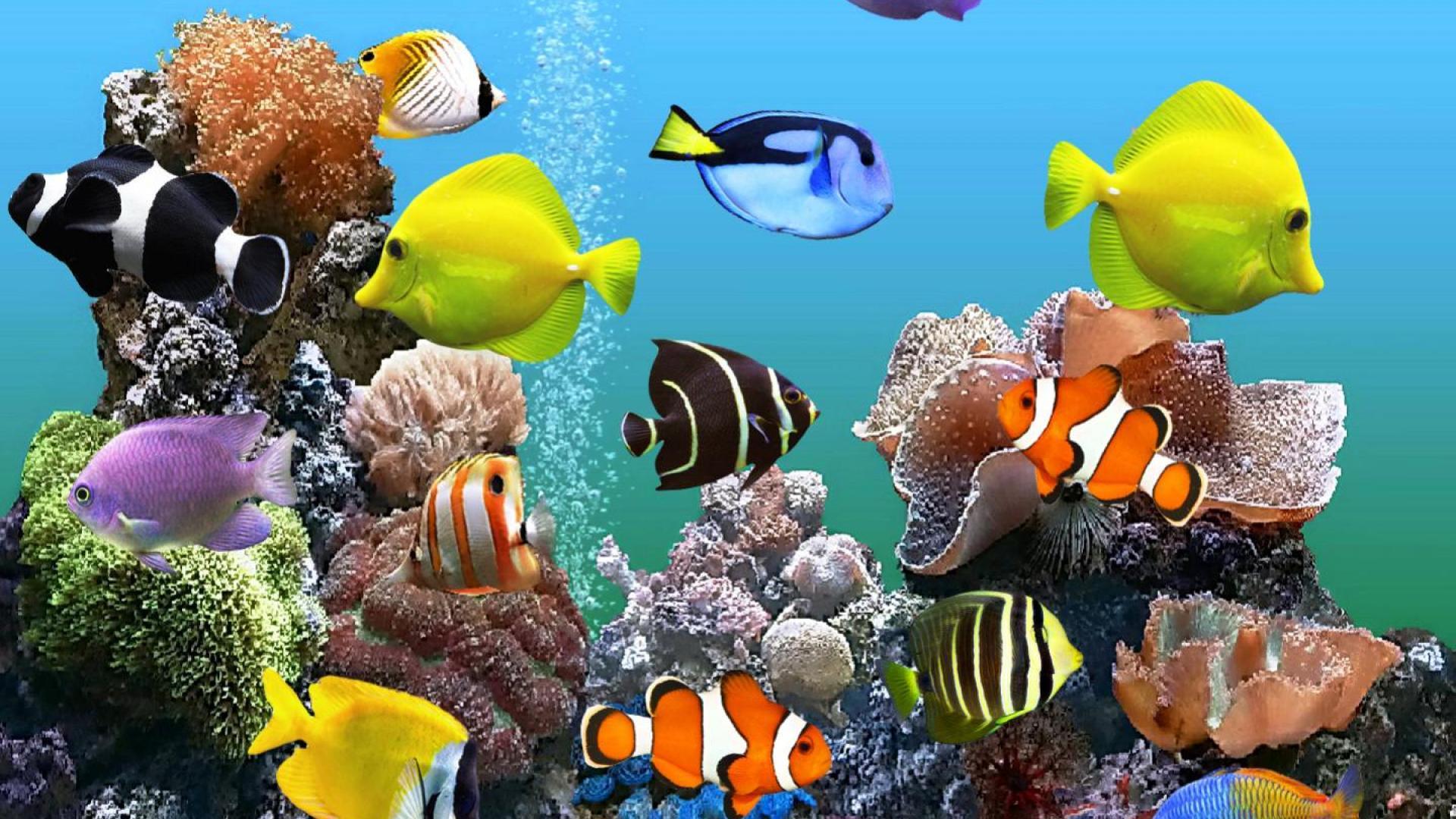 Fish Aquarium Desktop Wallpaper