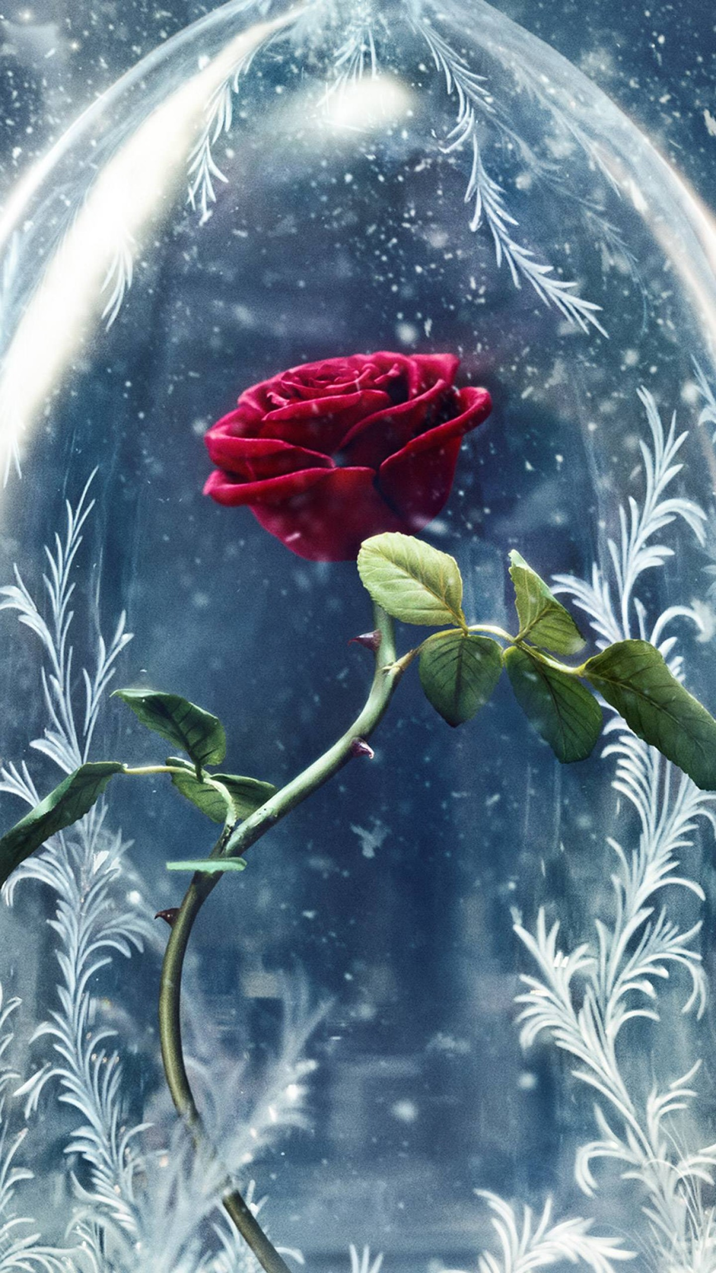 Beauty and the Beast Rose Background