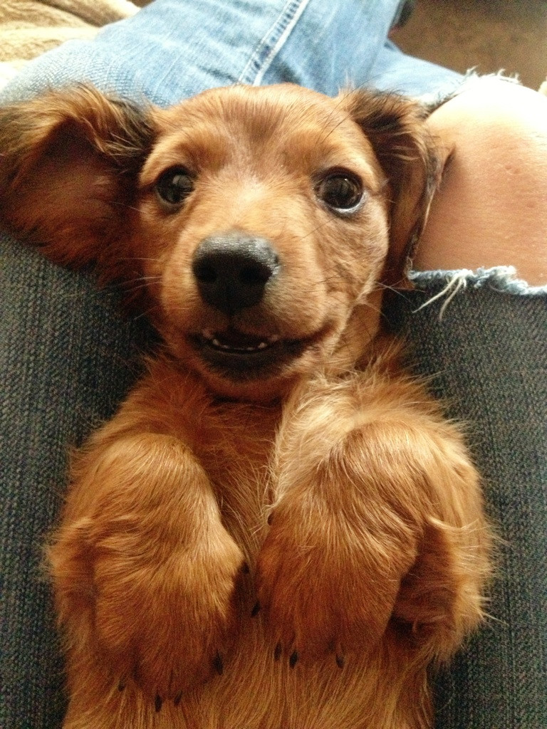 Funny Dogs Animal