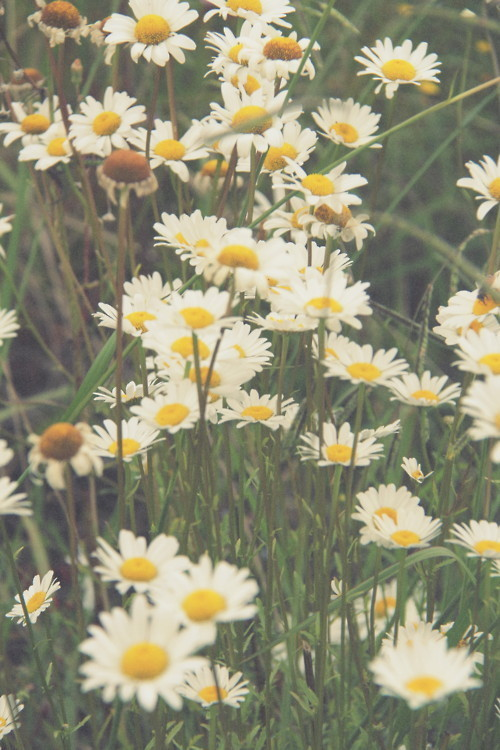 White Flowers Tumblr