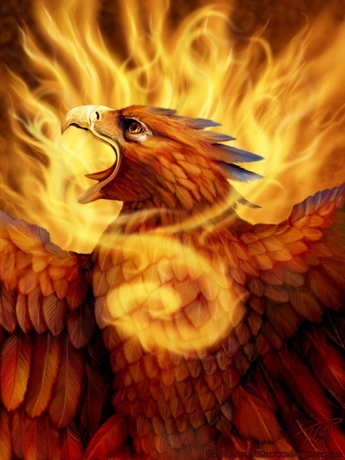 Picture Mythical Phoenix Bird