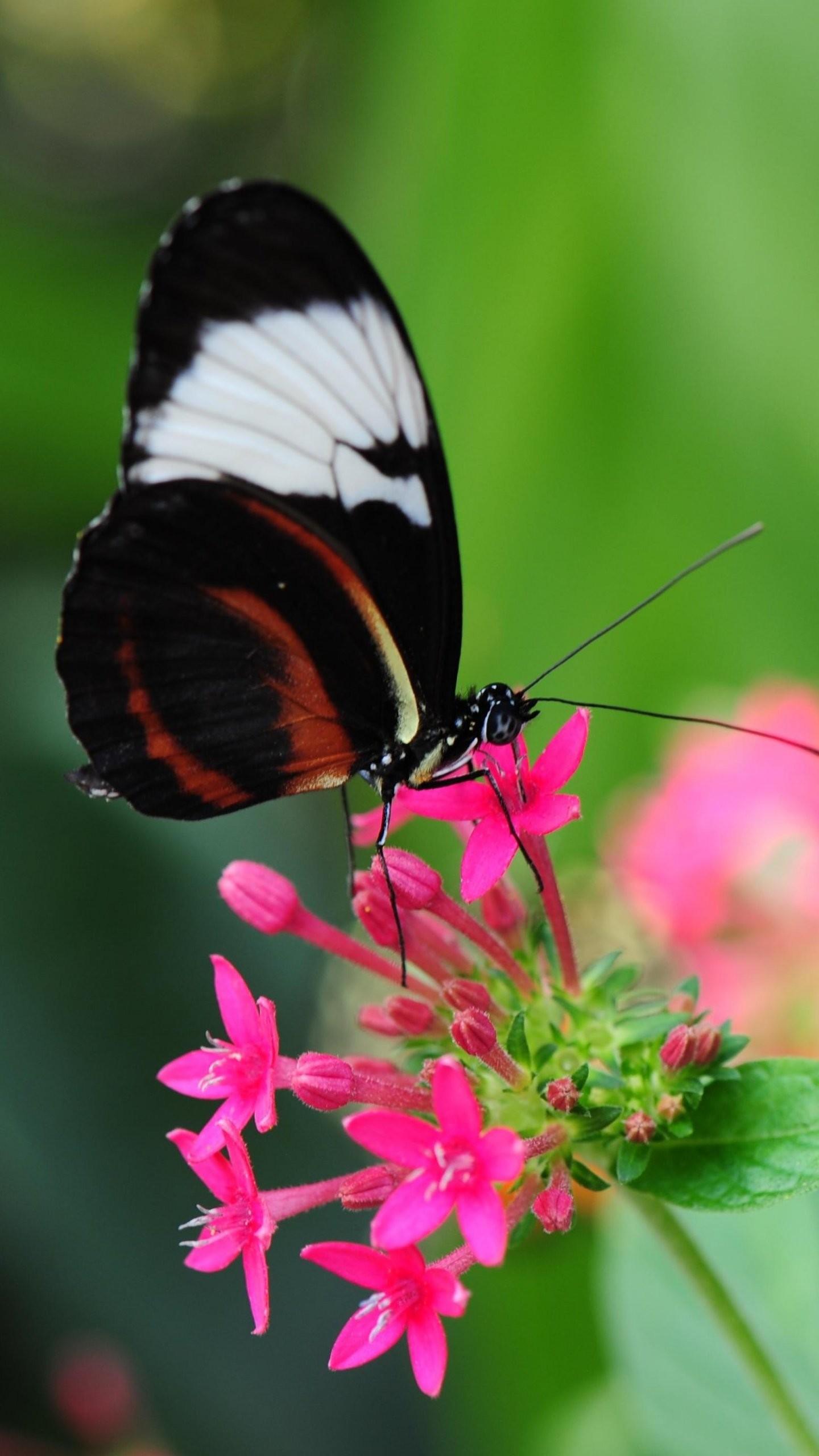 Butterfly Pink Flowers