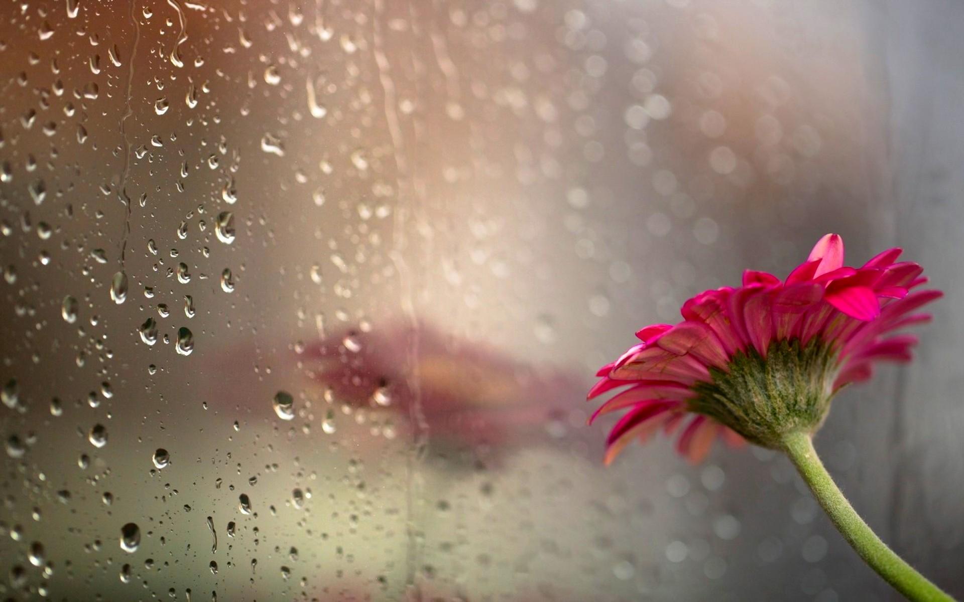 Pretty Rain Backgrounds