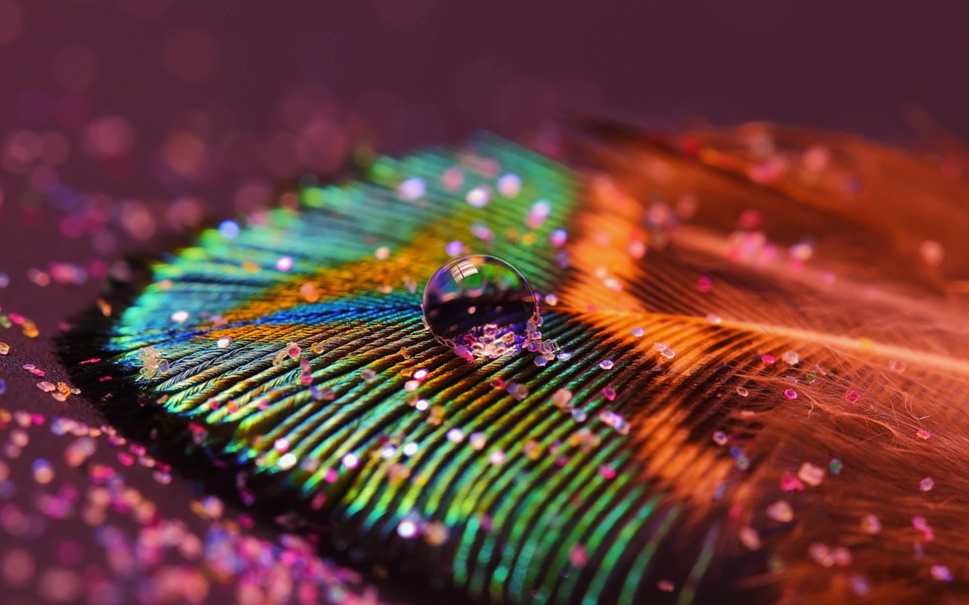 Peacock Feather Desktop Background