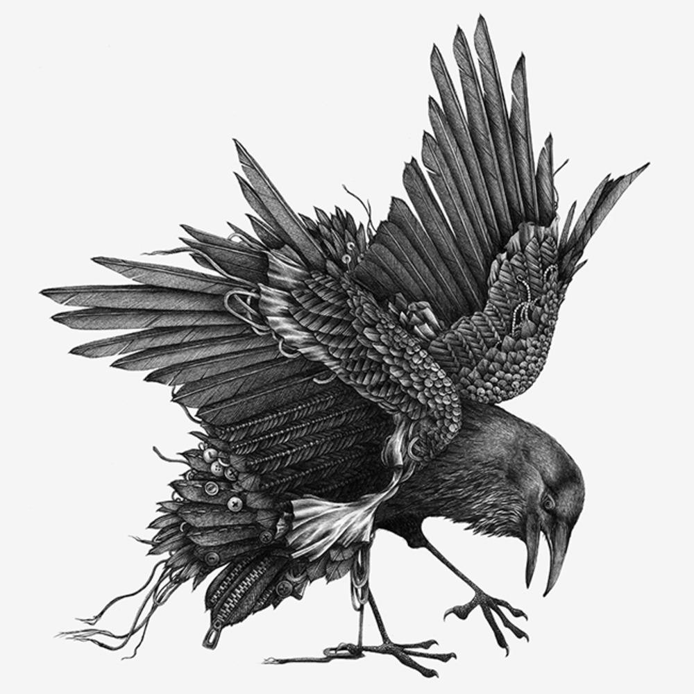 Black Raven Drawing
