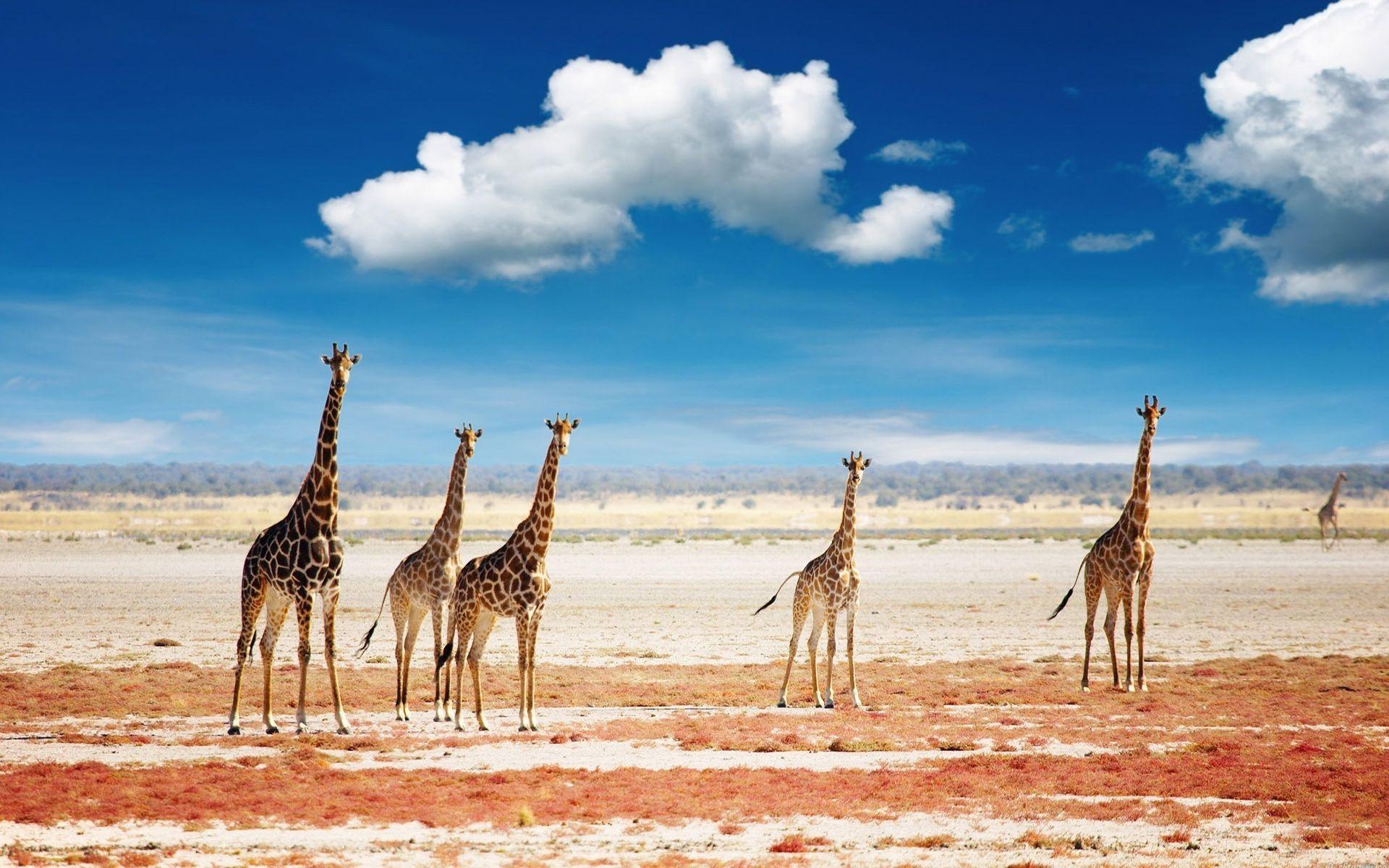 Africa Desktop Wallpaper
