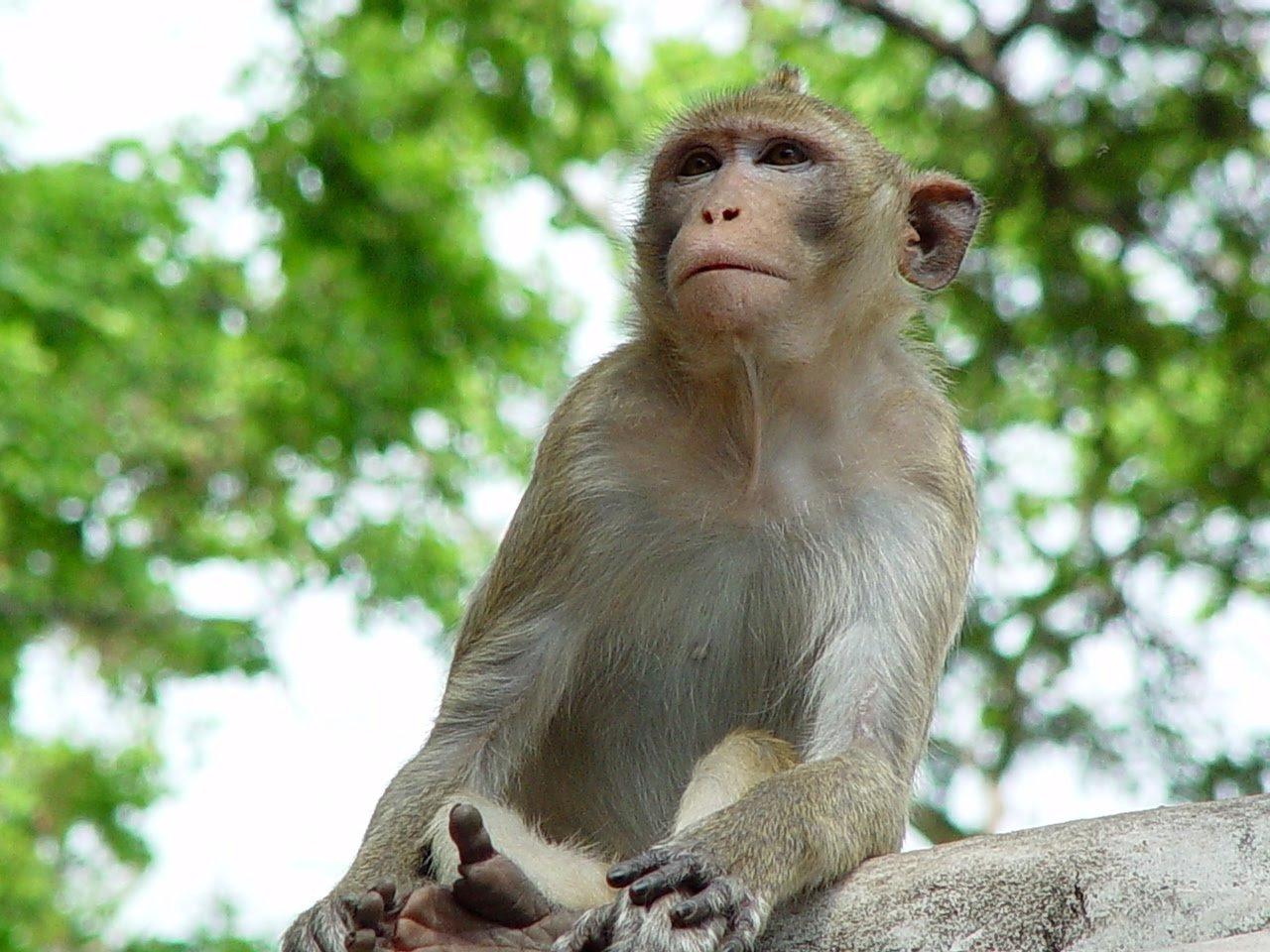 Cute Monkey Backgrounds