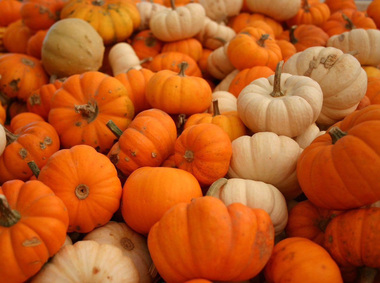 Free Fall Pumpkin Backgrounds