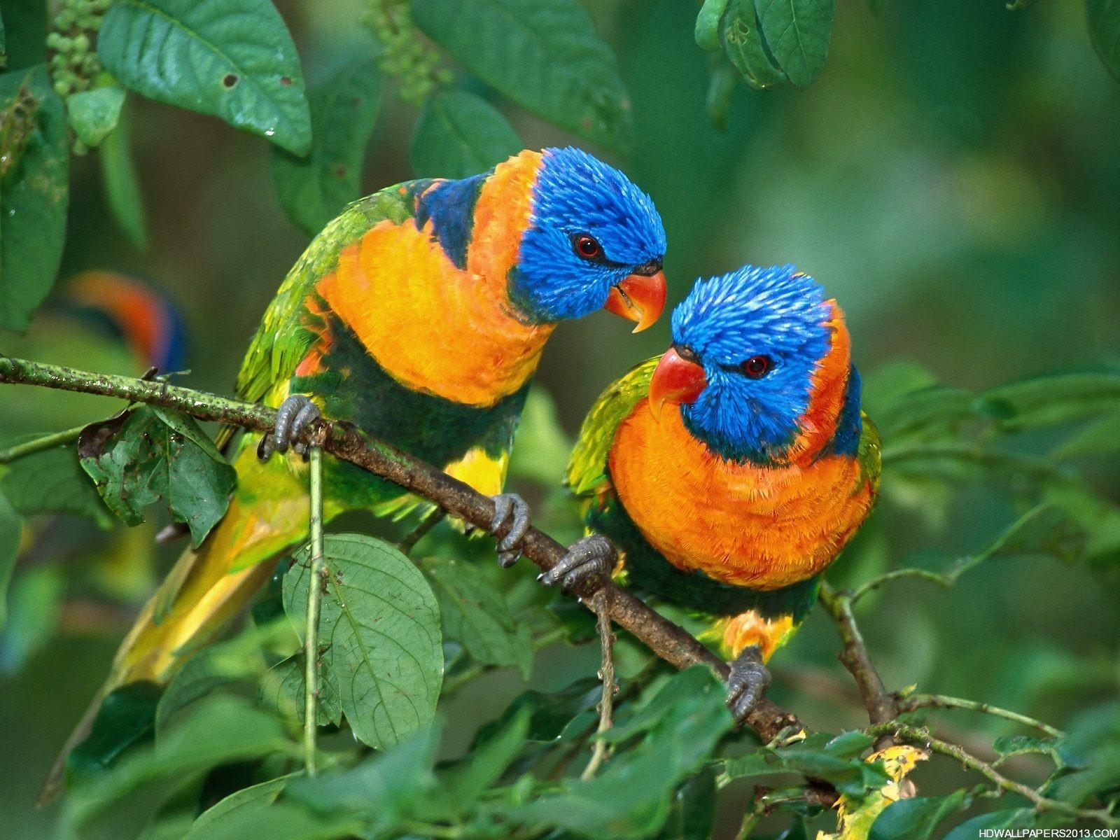 Birds Wallpaper Free Download