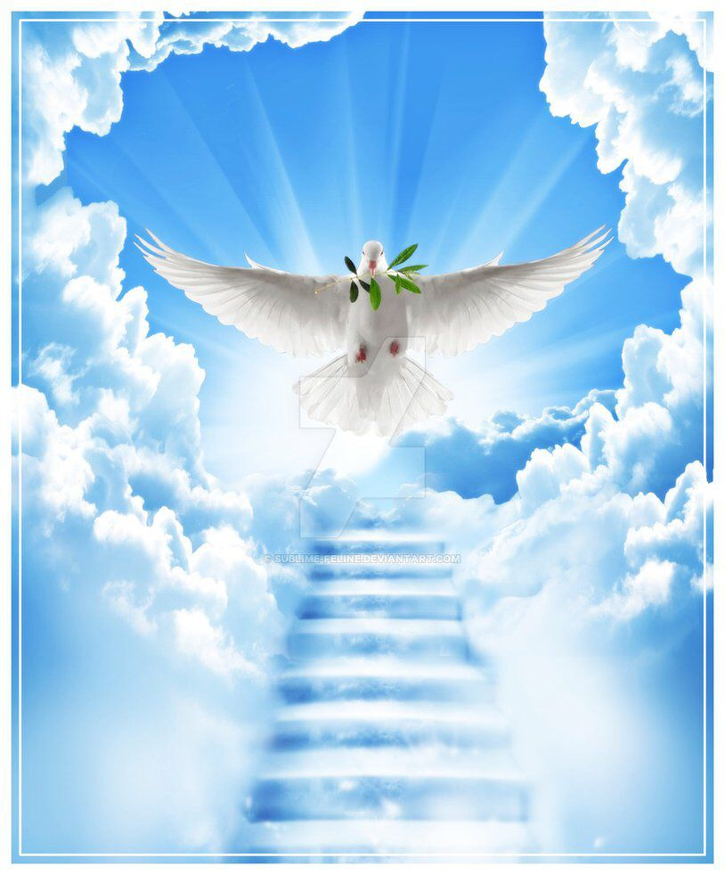 Heaven with Doves Backgrounds