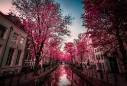Amsterdam Backgrounds Free Download