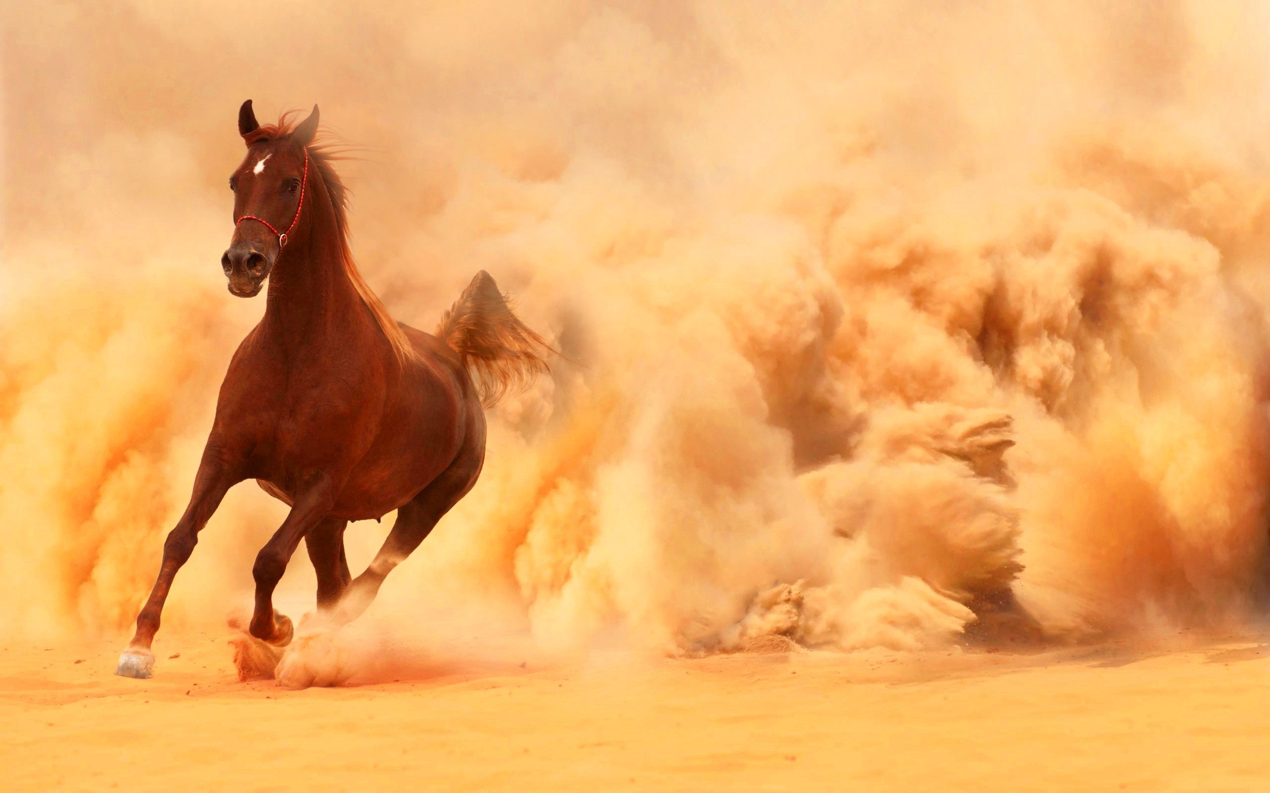 wallpaper.wiki-arabian-horse-running-out-of-the-desert-storm