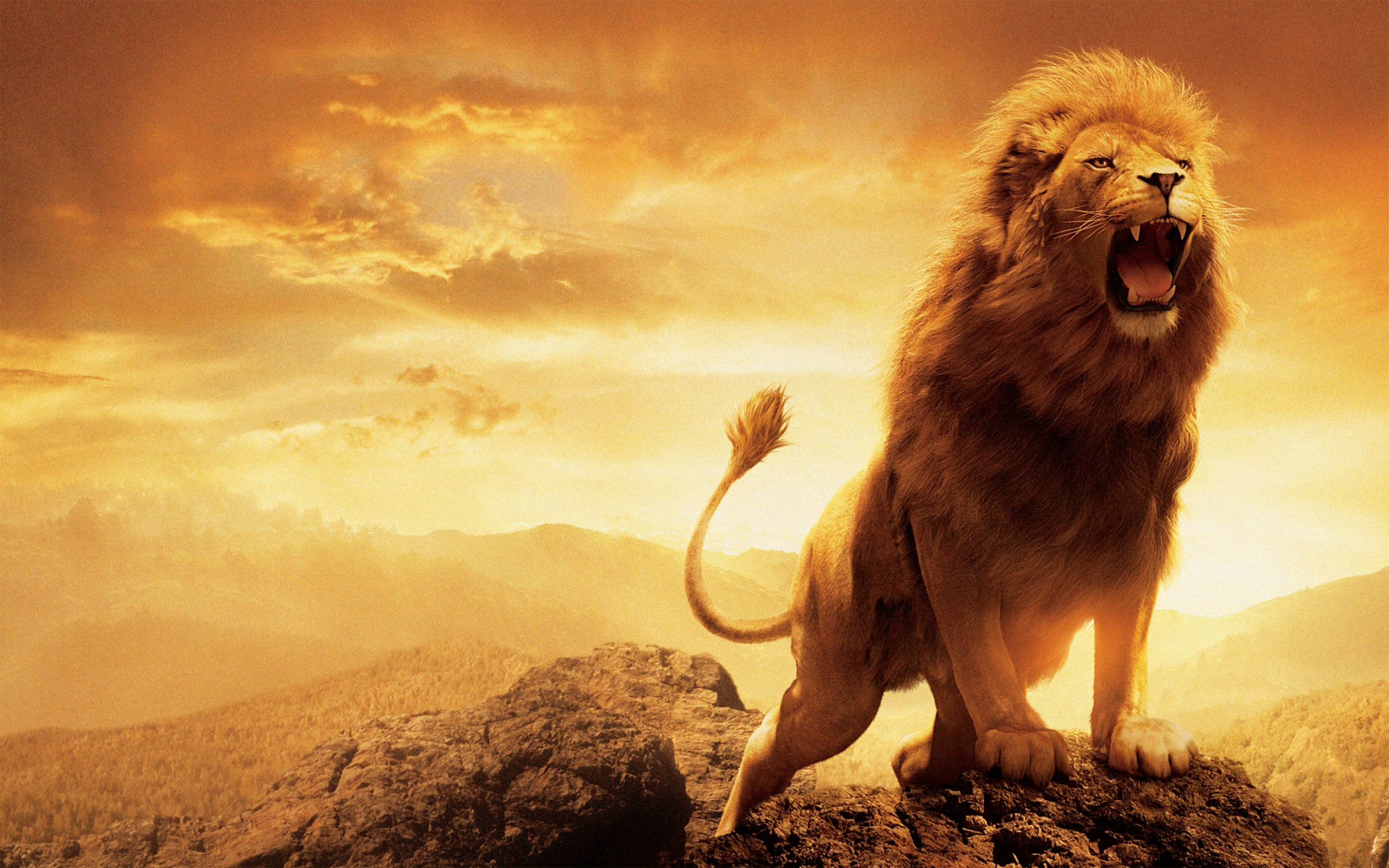 wallpaper.wiki-Aslan-Narnia-HD-Wallpaper-PIC-WPC0011246 ... for Narnia Aslan Wallpaper  186ref