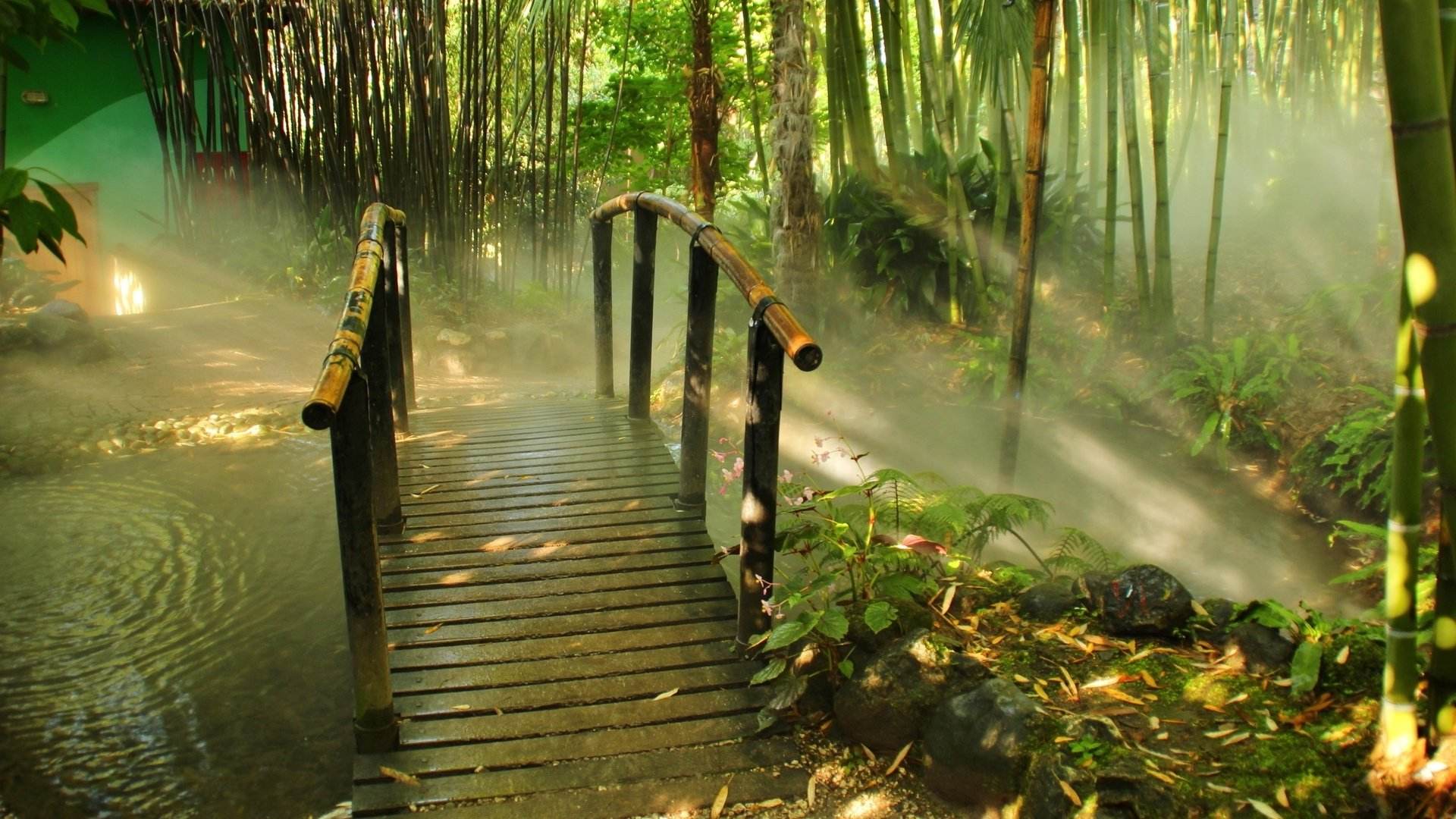Download Free Bamboo Forest Background - Page 2 of 3