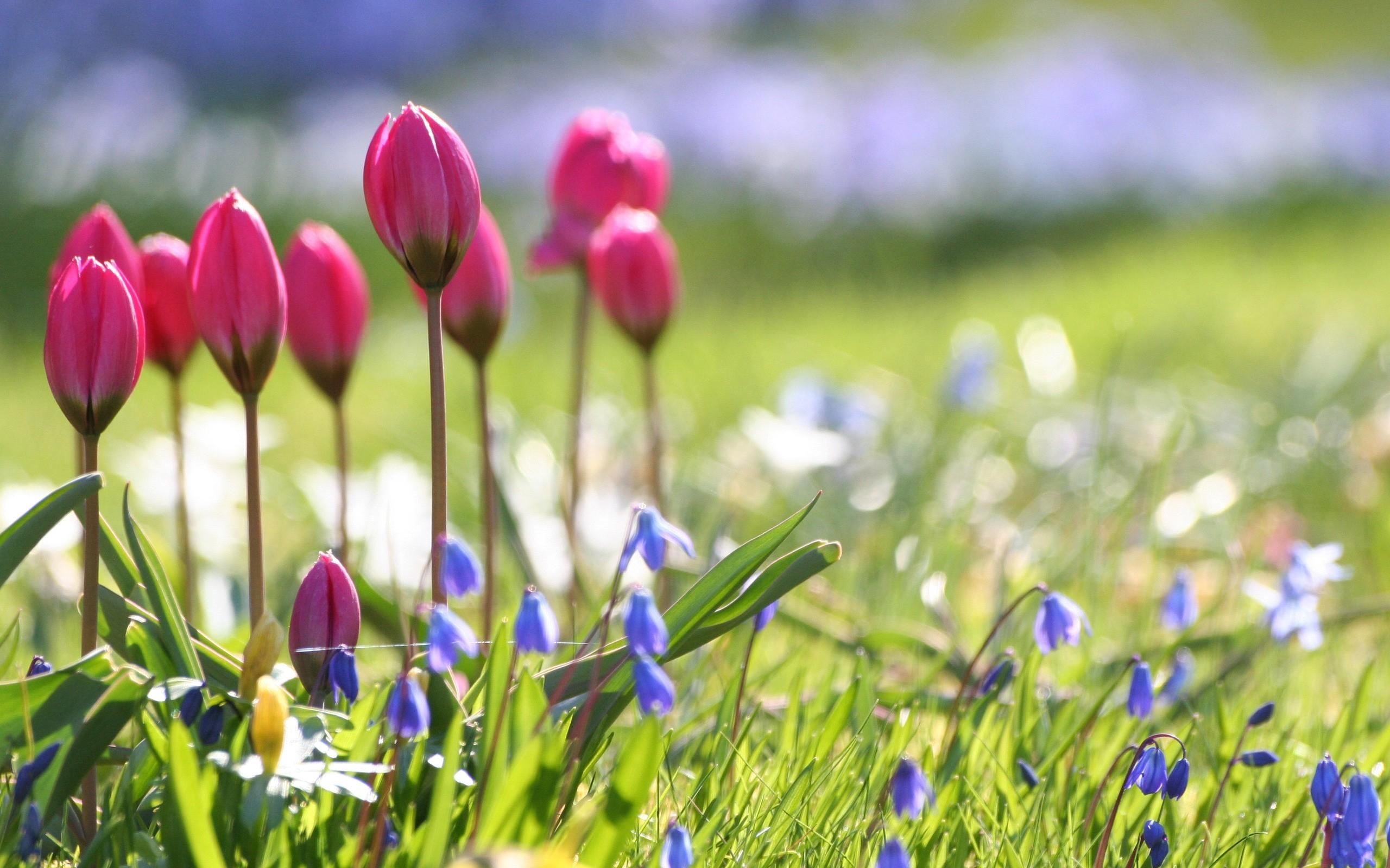 Wallpaperwiki Beautiful Nature Spring Flower Wallpaper PIC WPD0012883 By Billion Photos