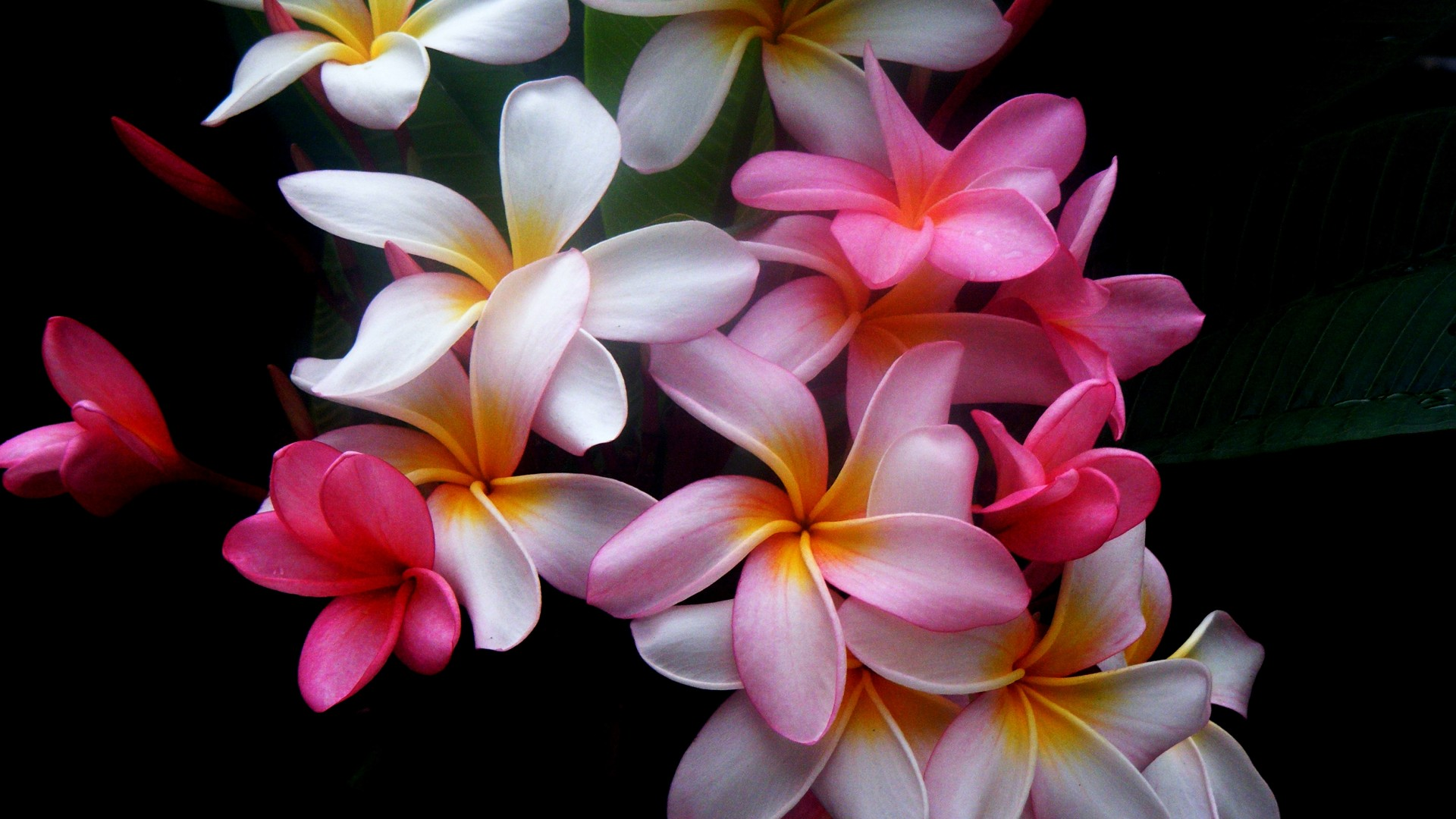 wallpaper.wiki-beautiful-flowers-pictures-1920x1080-pic-wpd0013186