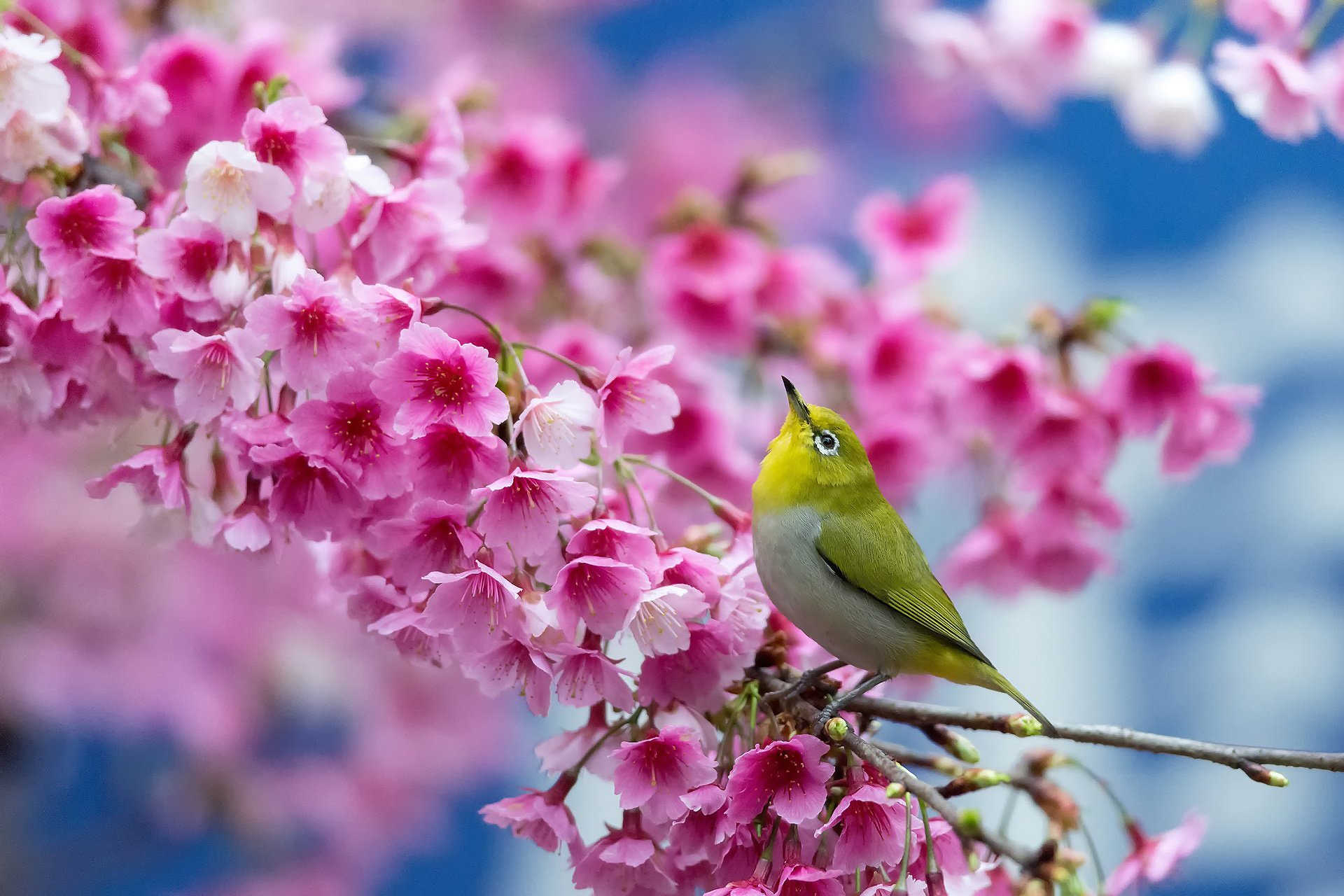 wallpaper.wiki-birds-and-blooms-desktop-background-pic-wpb0014858