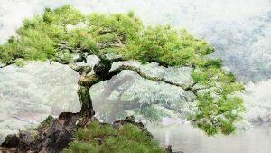 Free Download Bonsai Tree Background