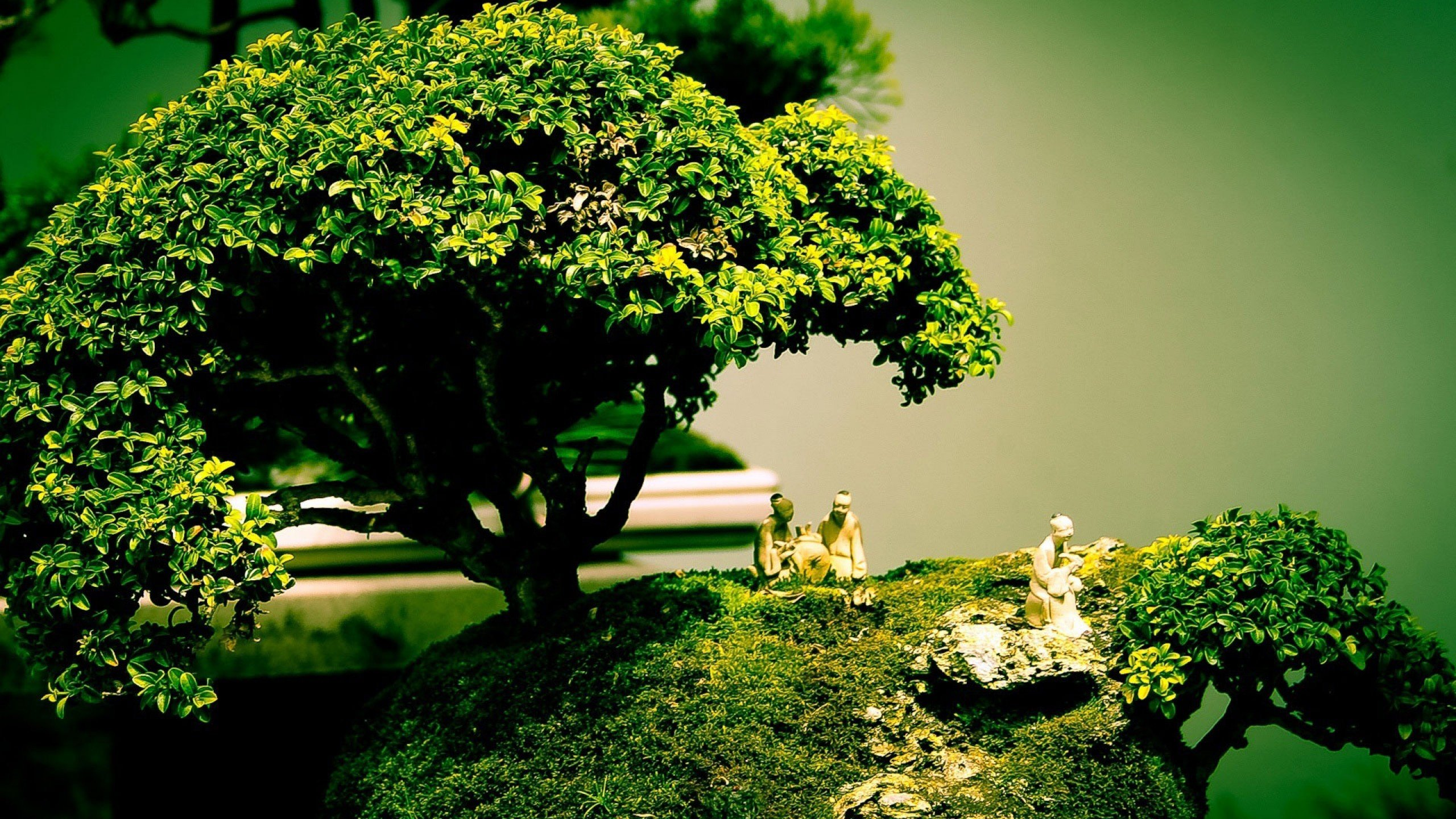 wallpaper.wiki-bonsai-tree-cool-images-desktop-nature-widescreen