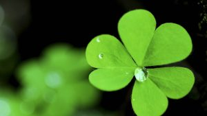 Download Free Clover Wallpaper