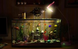 Aquarium Backgrounds Download Free