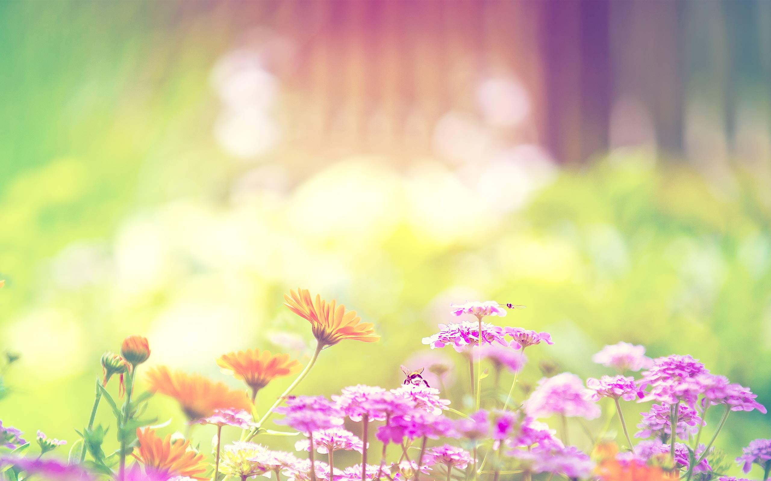 Wallpaper cute spring flowers hd desktop flowers desktop download mightylinksfo