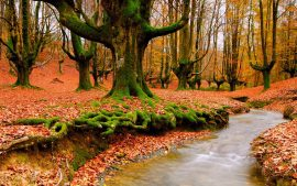 Autumn River HD Photographs