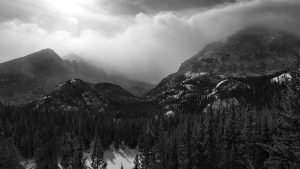 Download Free Black and White Forest Wallpaper Photos