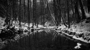 Black and White Forest Images as Backgrounds for Desktop