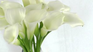 Download Free Calla Lily Wallpaper
