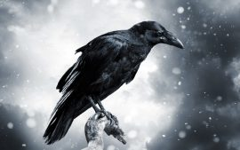 Free Download Crows Wallpaper