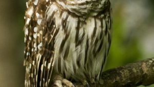 Cute Owl Background for Android Download Free