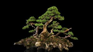 Bonsai Tree Japanese Artform Wallpaper Creations To Delight