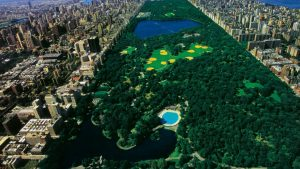 Central Park Background Download Free
