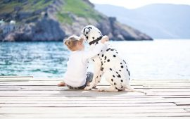 Dalmatian Desktop Background