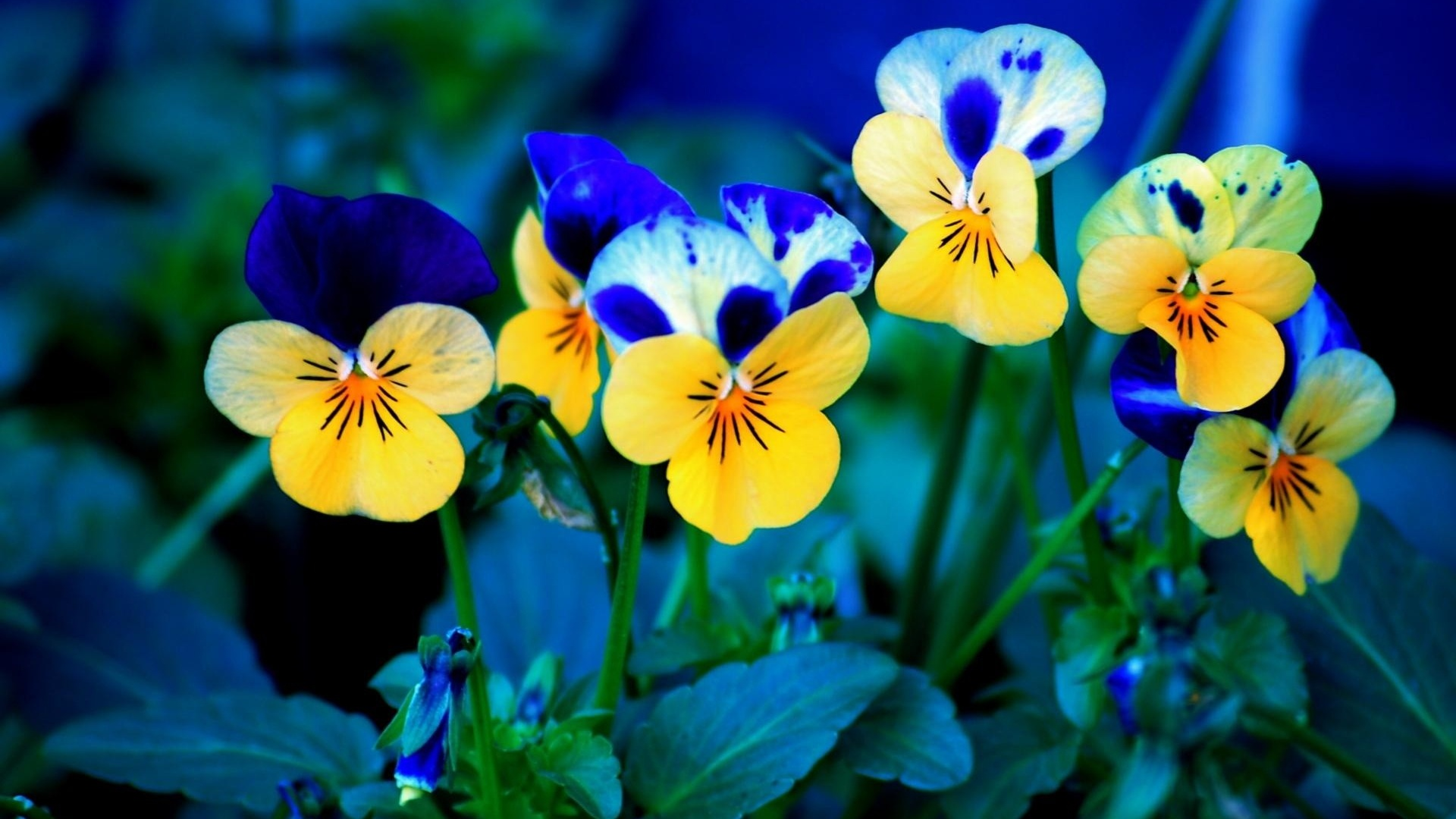 Wallpaper download free spring flowers wallpaper pic wpb00396 download mightylinksfo