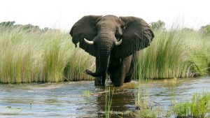 Elephant Images Free Download