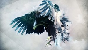 Eagle Bird High Definition Photo Backgrounds