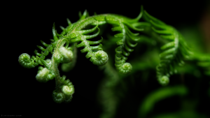 Fern Wallpapers HD