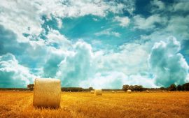 Field Rural Landscape Wallpapers HD