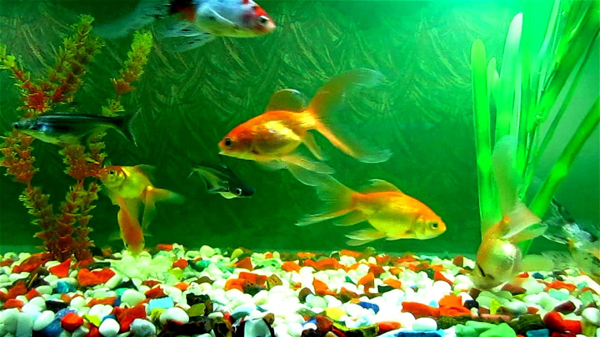 wallpaper fish aquarium 3d