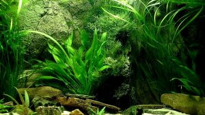 Fish Tank Bright And Colourful Wallpapers in Excellent HD